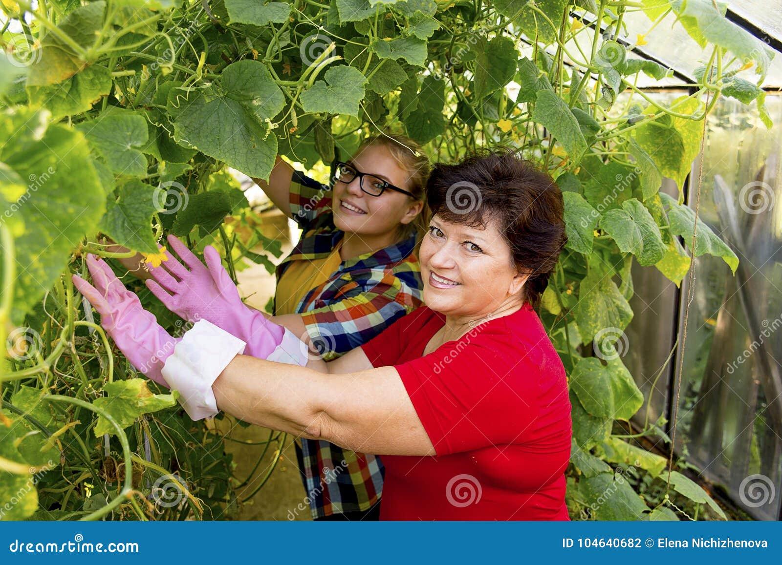 Download Vrouwen Die In Een Serre Werken Stock Foto - Afbeelding bestaande uit vers, landbouw: 104640682