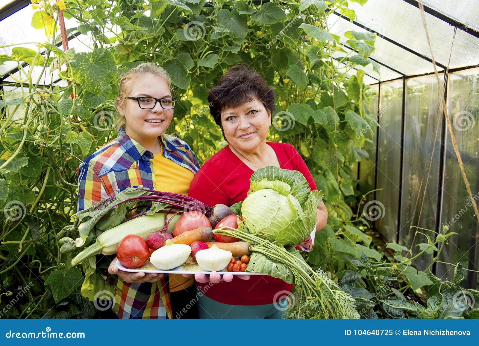 Download Vrouwen Die In Een Serre Werken Stock Afbeelding - Afbeelding bestaande uit mooi, growing: 104640725