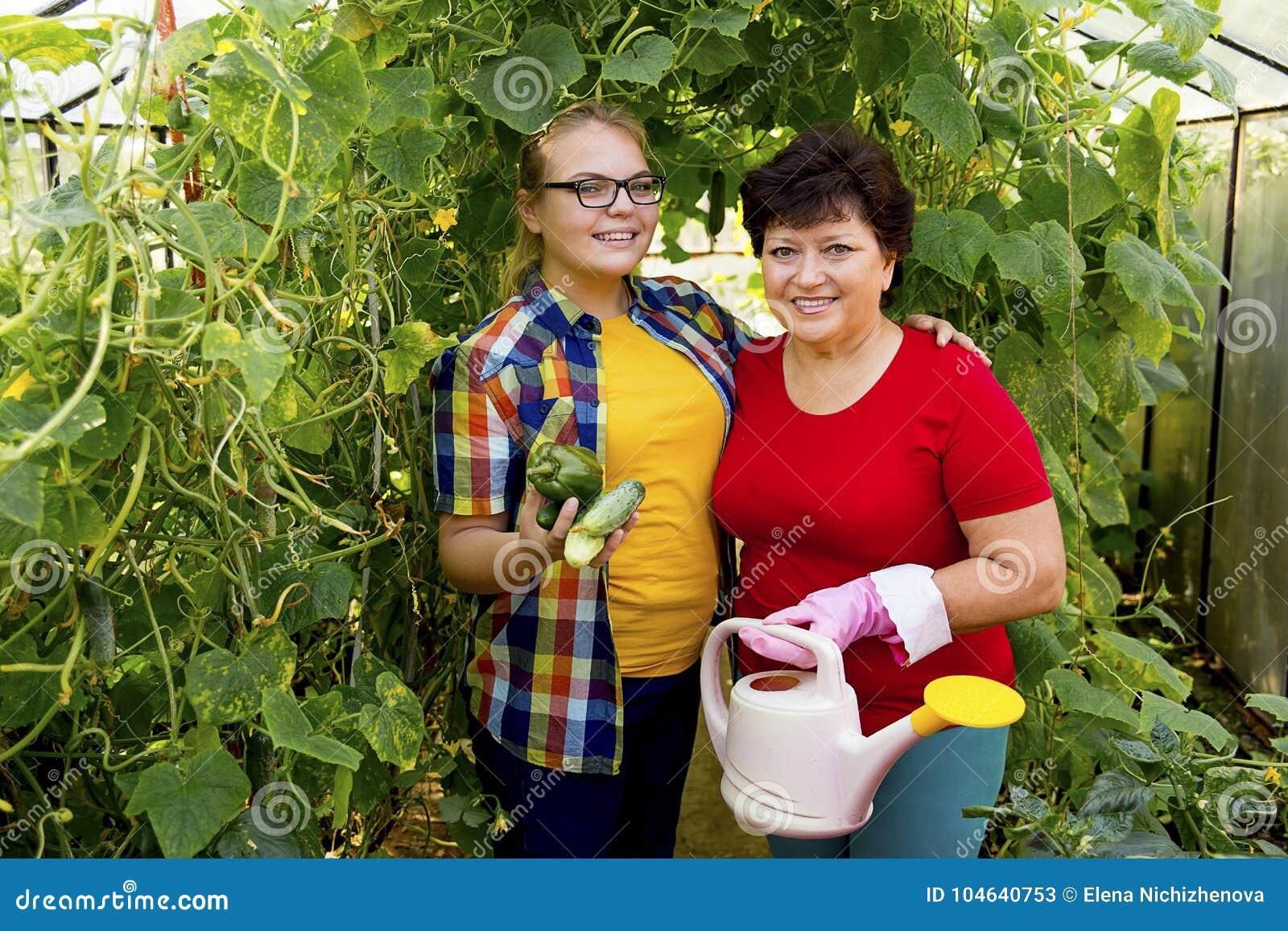 Download Vrouwen Die In Een Serre Werken Stock Afbeelding - Afbeelding bestaande uit growth, landbouwer: 104640753