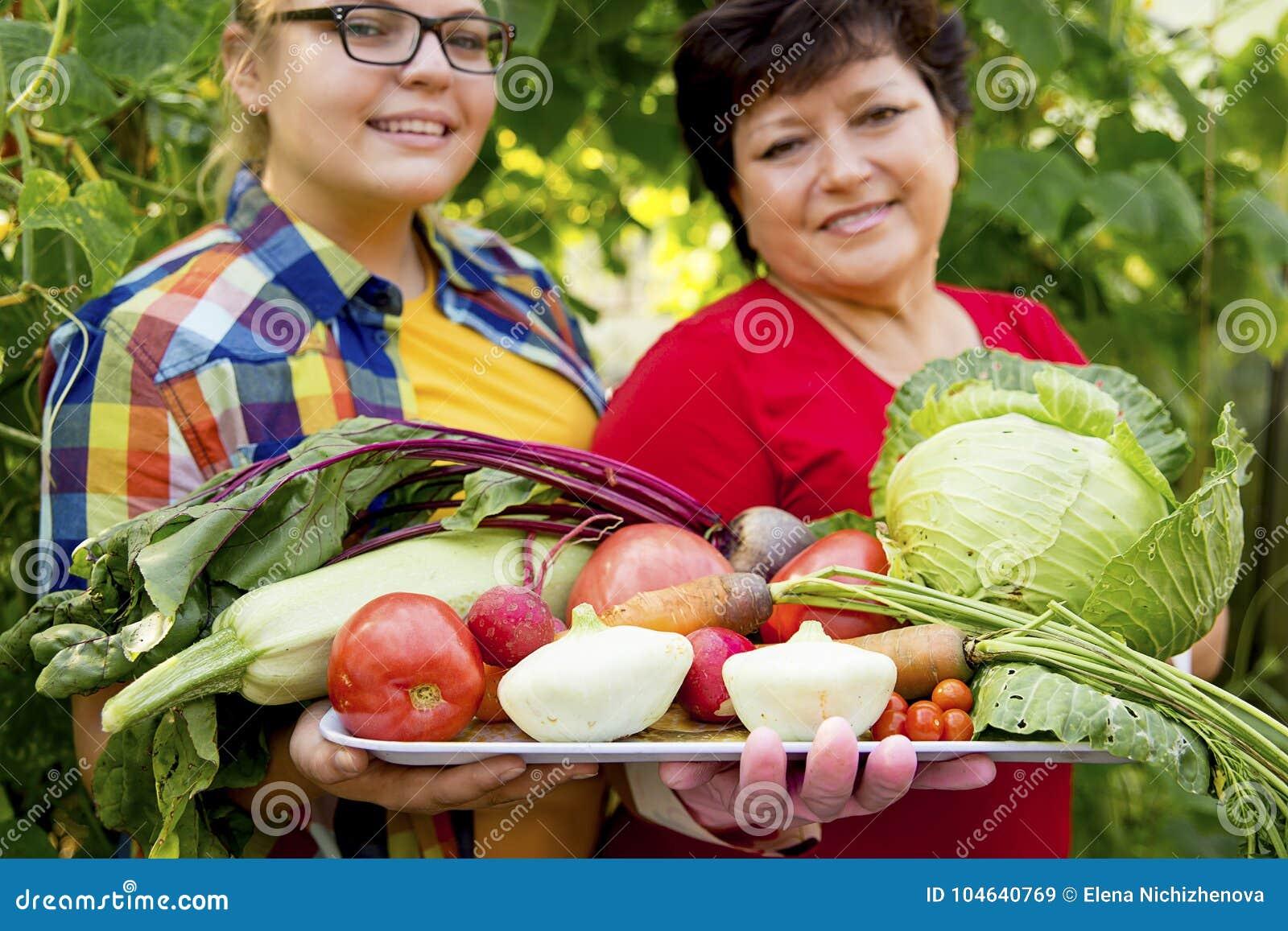 Download Vrouwen Die In Een Serre Werken Stock Afbeelding - Afbeelding bestaande uit landbouw, groen: 104640769