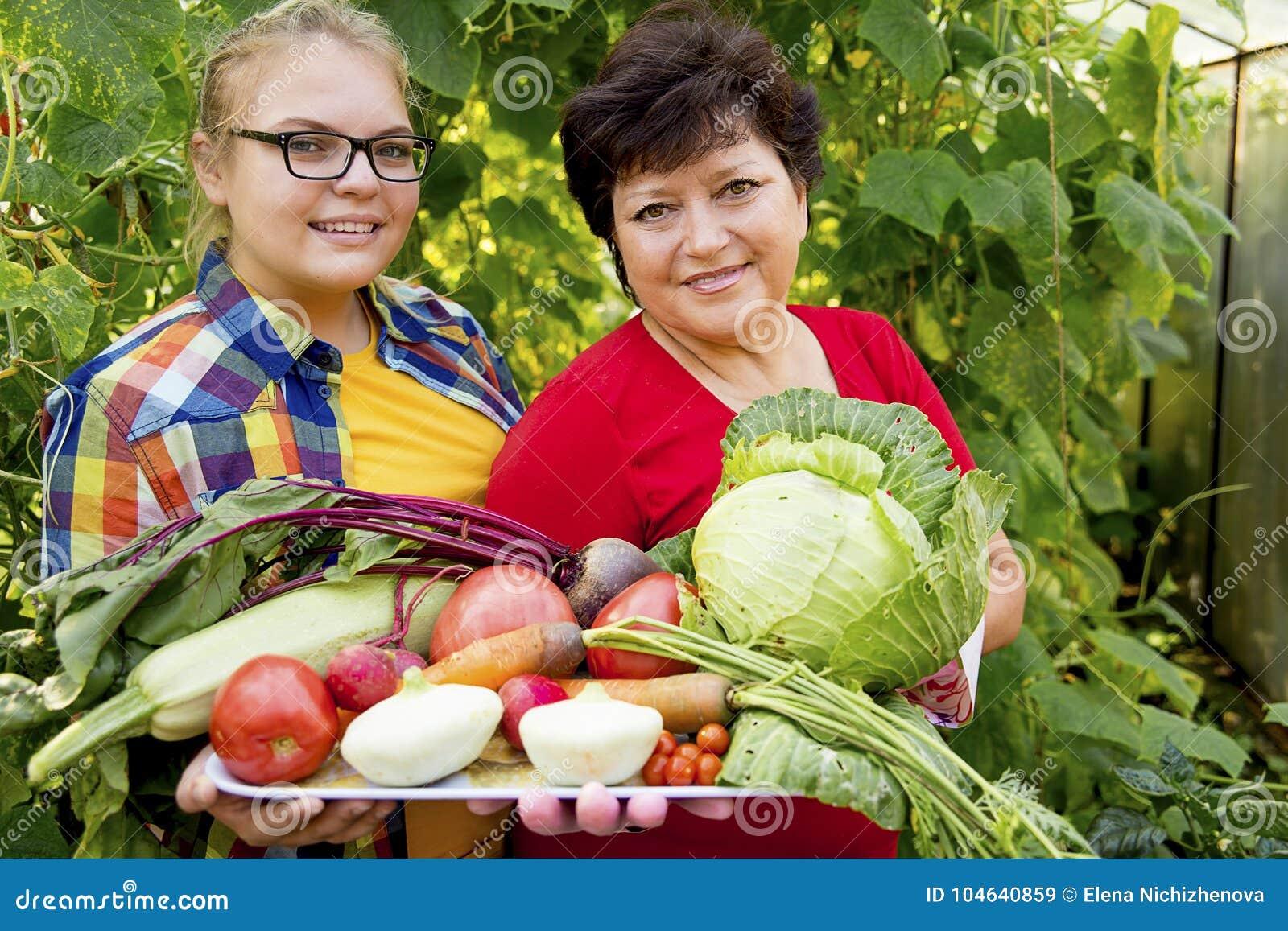 Download Vrouwen Die In Een Serre Werken Stock Afbeelding - Afbeelding bestaande uit tuinbouw, growth: 104640859
