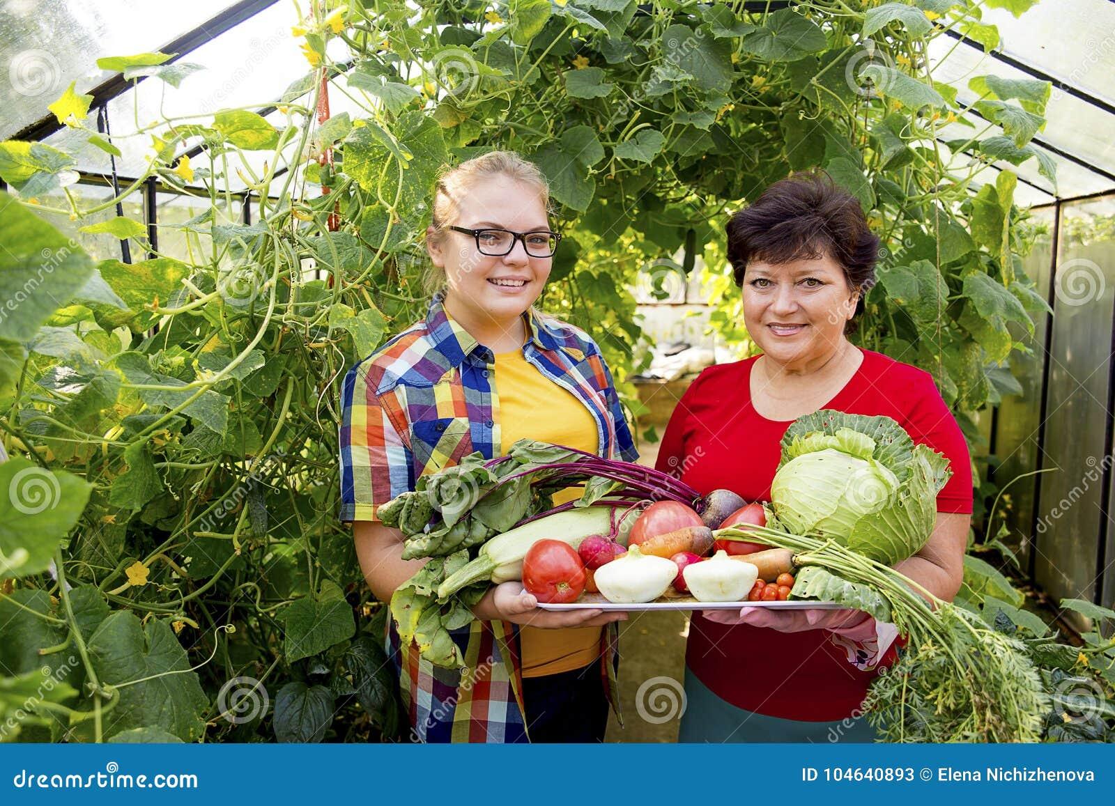 Download Vrouwen Die In Een Serre Werken Stock Afbeelding - Afbeelding bestaande uit landbouwer, meisje: 104640893