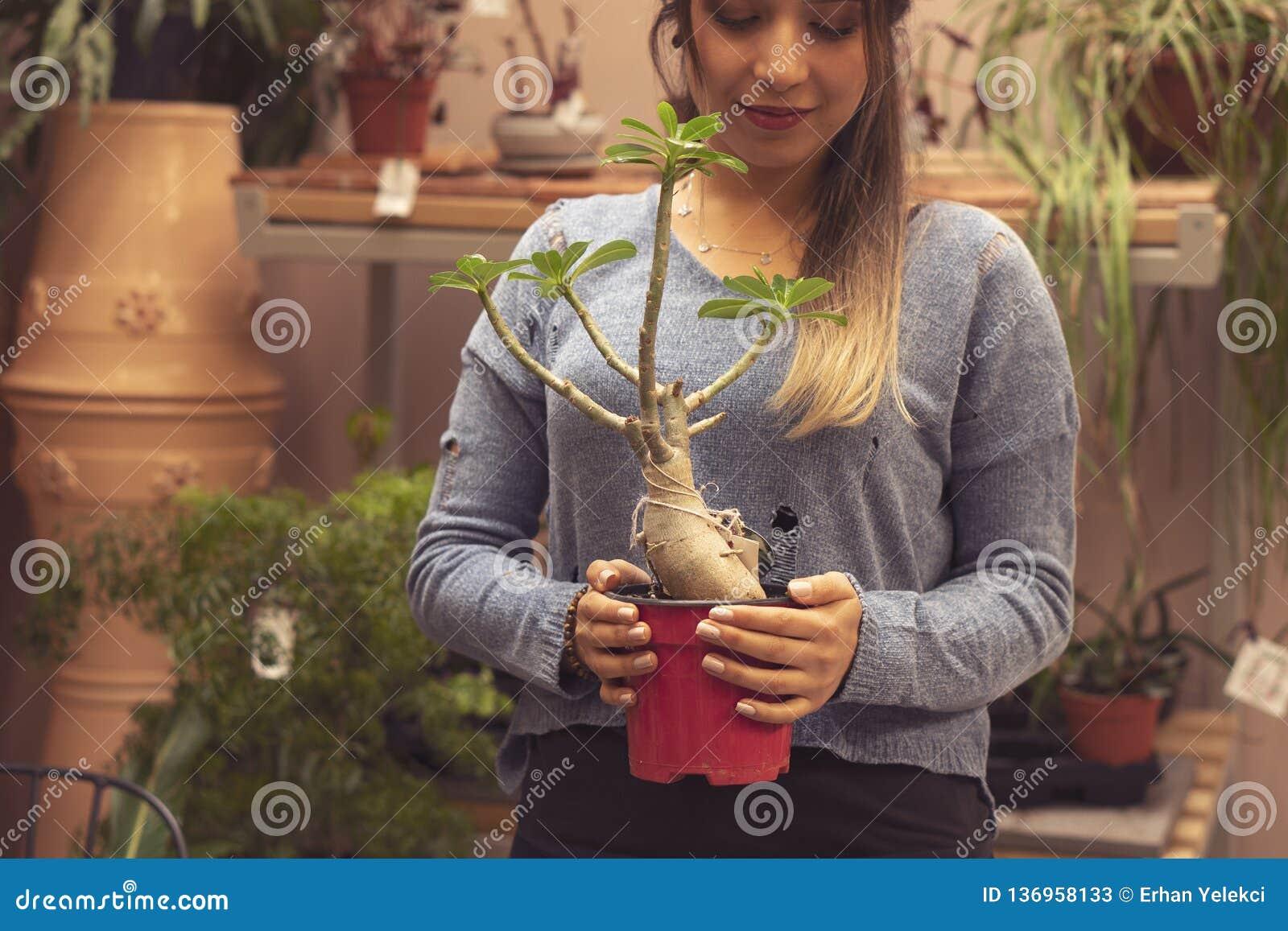 Vrouwentuinman die cactusinstallatie in een pot in serre planten Vrouwelijke werknemer die bij een tuin werken