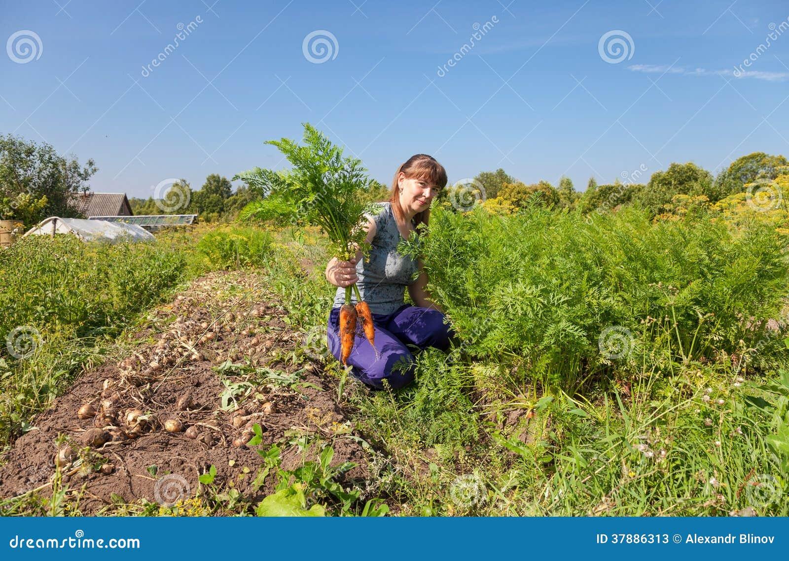 Vrouwentuinman die een schoof van wortelen in haar tuin houden