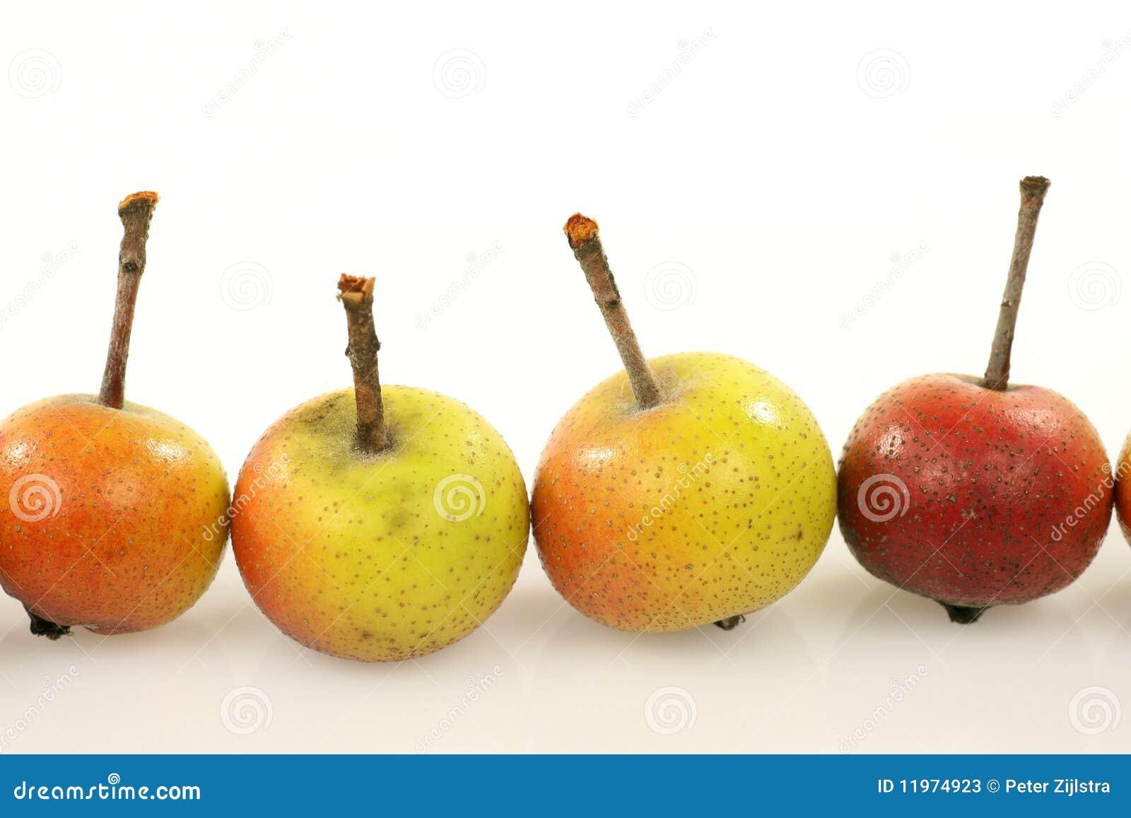 Vruchten van Malus Pumila