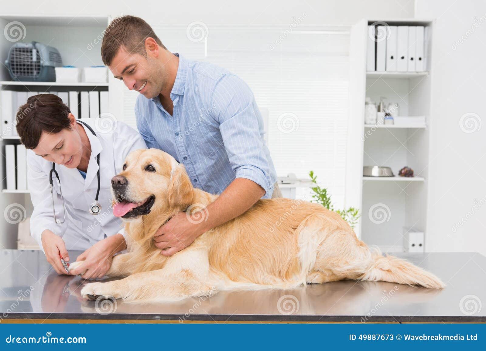 V t rinaire l 39 aide du coupe ongles sur un chien avec son propri taire photo stock image - Couper les ongle d un chien ...