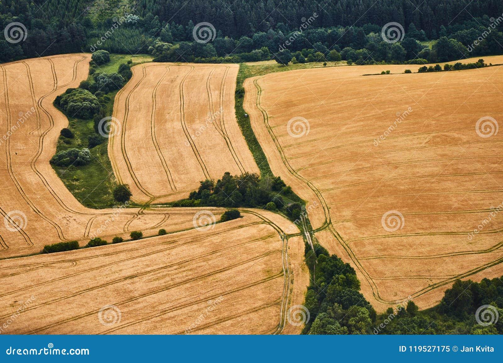 Vue aérienne d un paysage avec les champs de blé jaunes et les buissons verts
