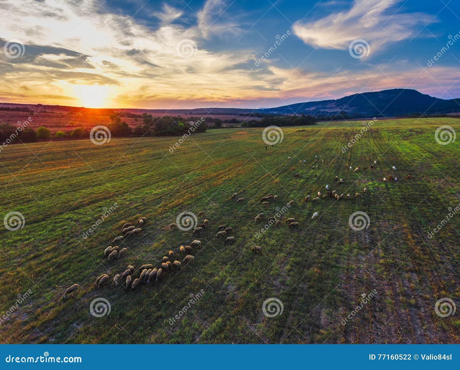 Vue aérienne de coucher du soleil au-dessus de champ