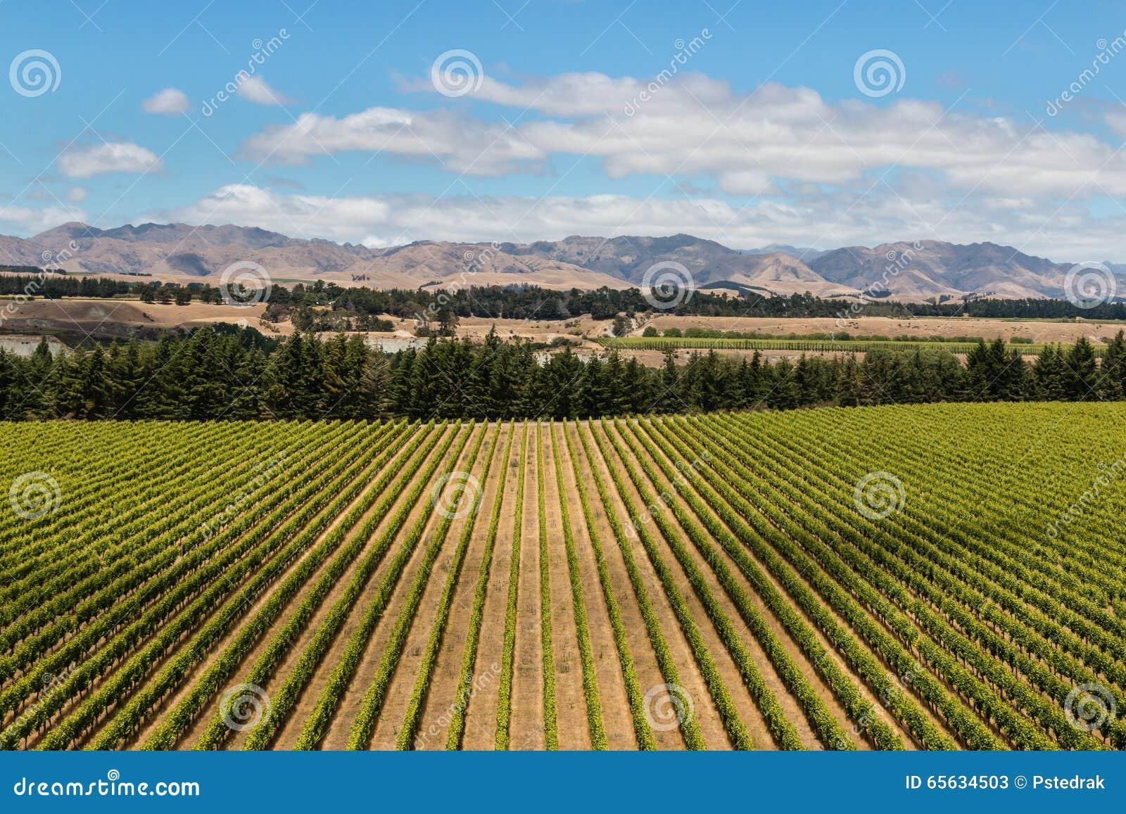 Vue aérienne de plantation de vignoble
