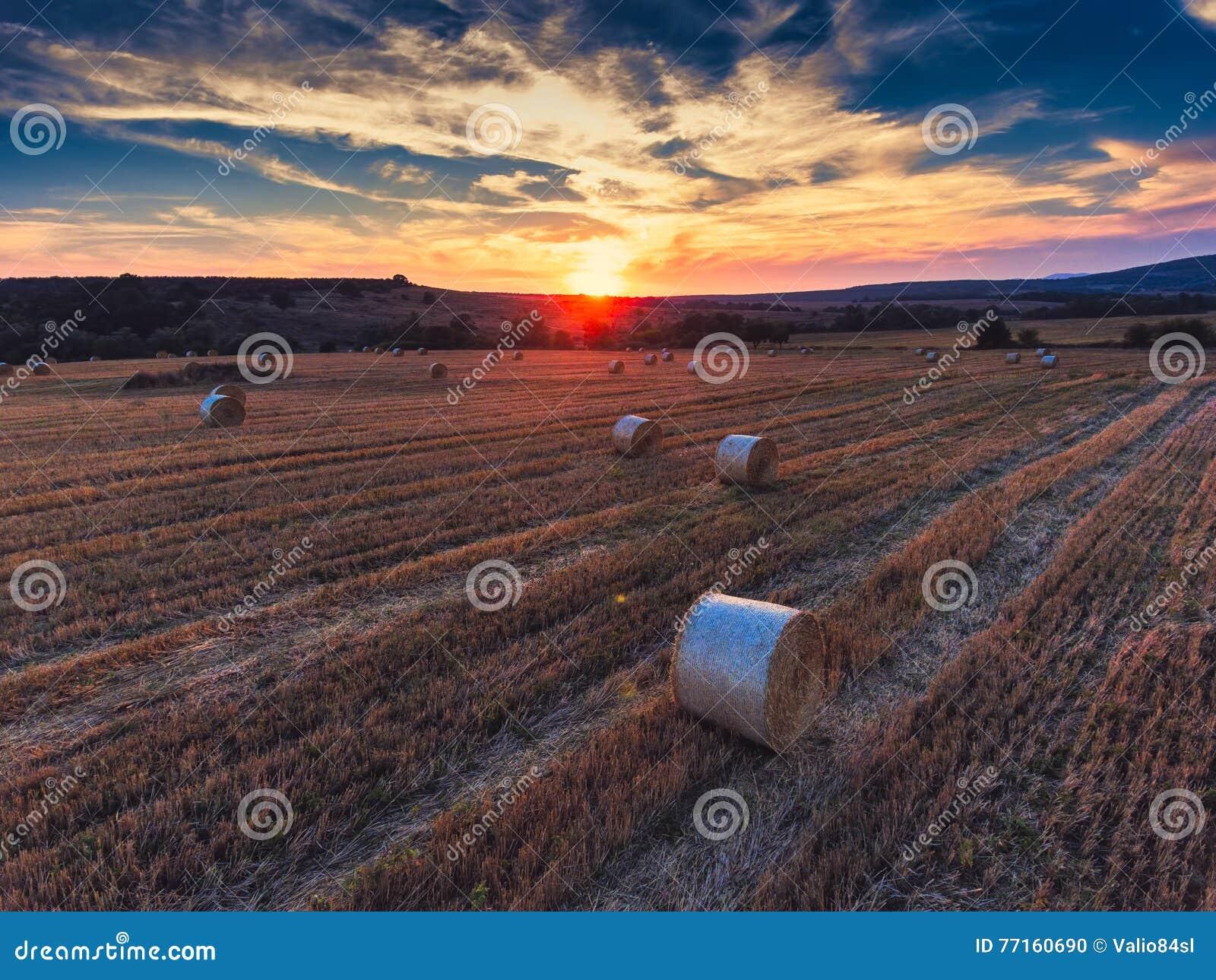 Vue aérienne sur le champ de blé