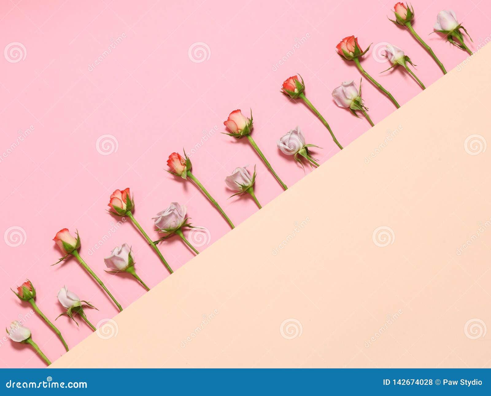 Vue avec des roses Roses blanches roses Fond de backgroundFlowers de rose de vacances L appartement s étendent avec les roses ros