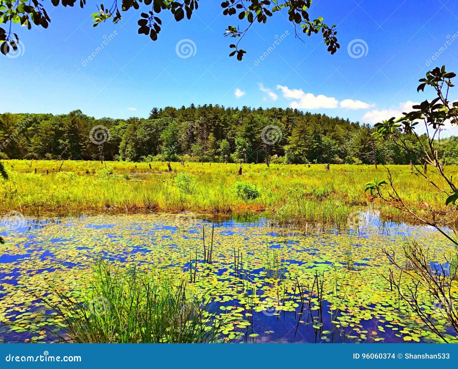 Vue d été de parc d état de Burr Pond