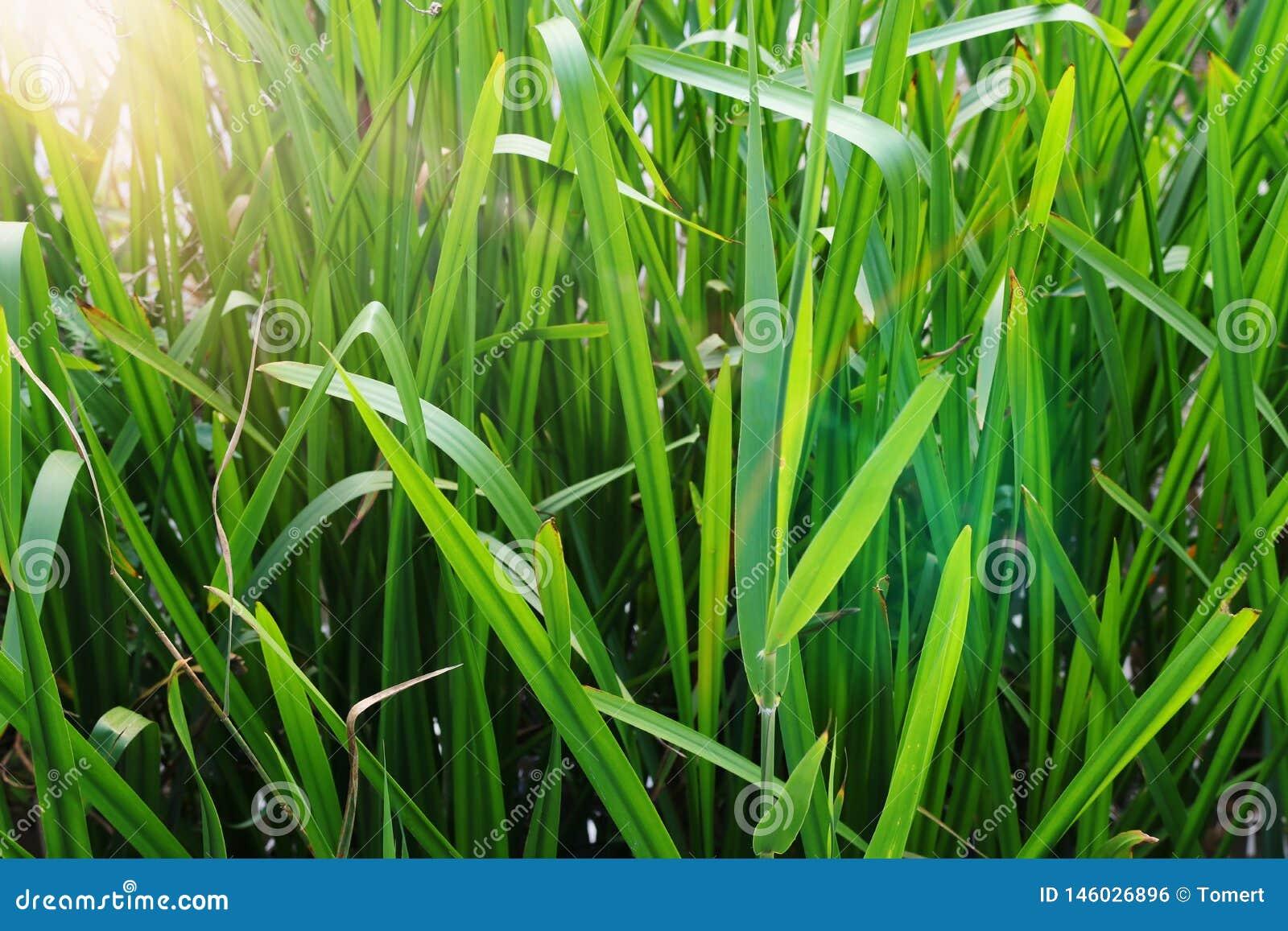Vue d angle faible d herbe fra?che concept de libert? et de renouvellement