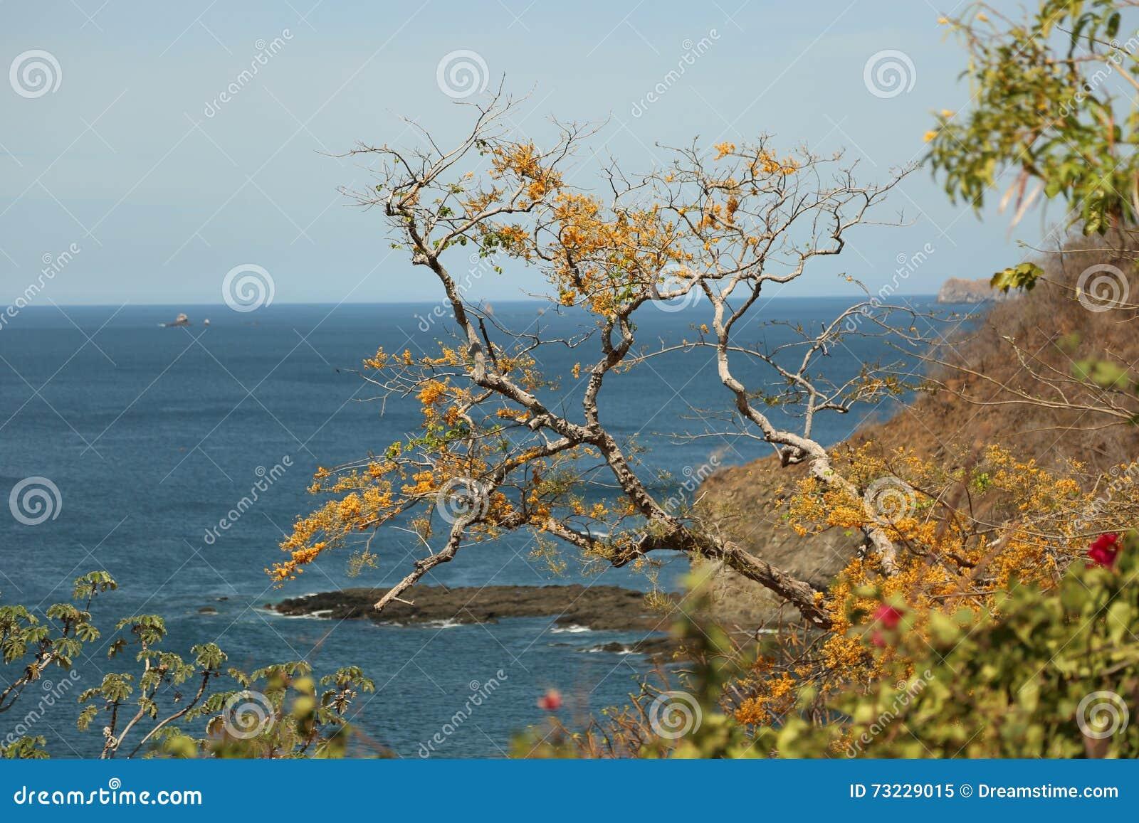 Vue d océan