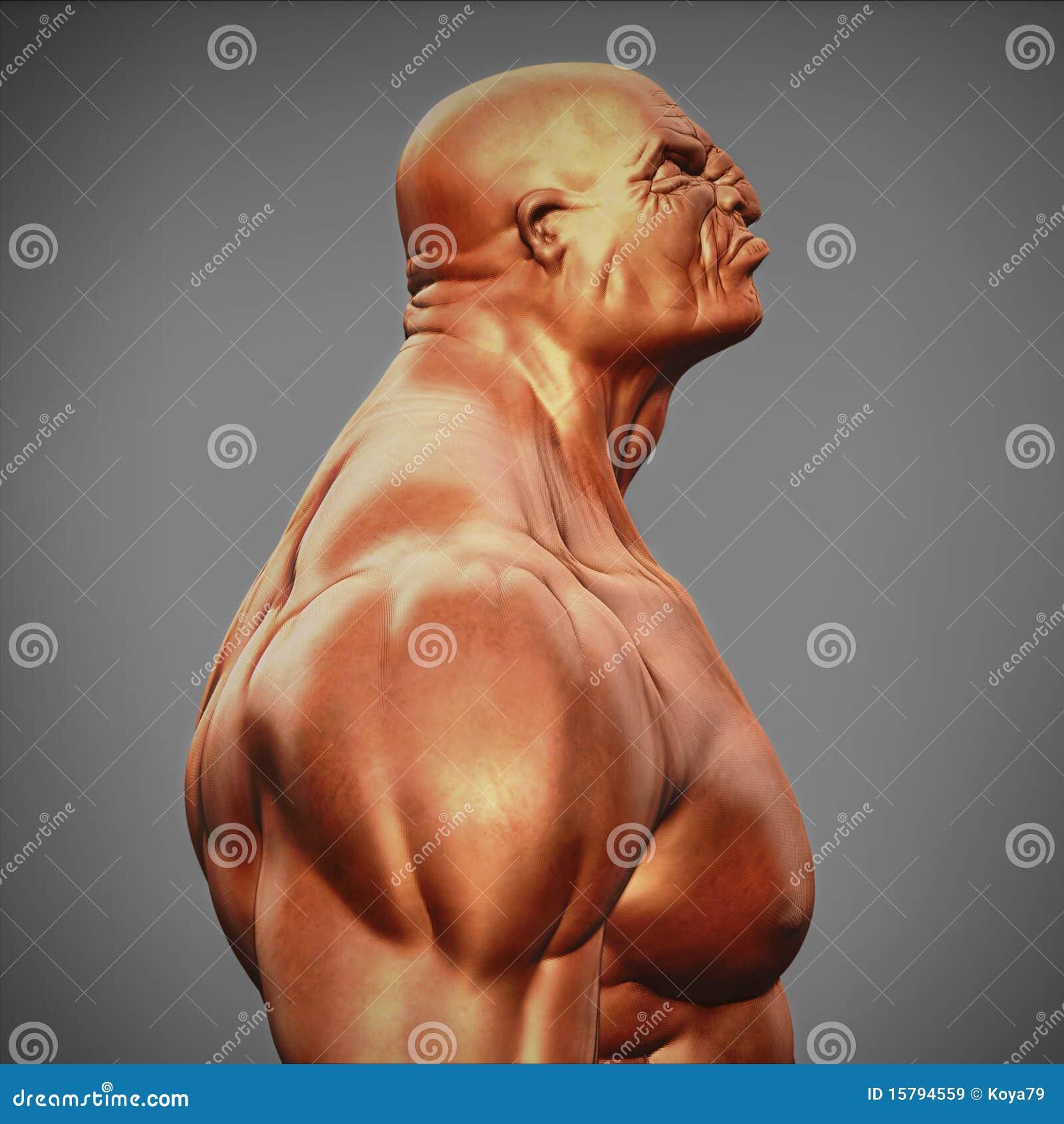 Vue de côté de poitrine mâle