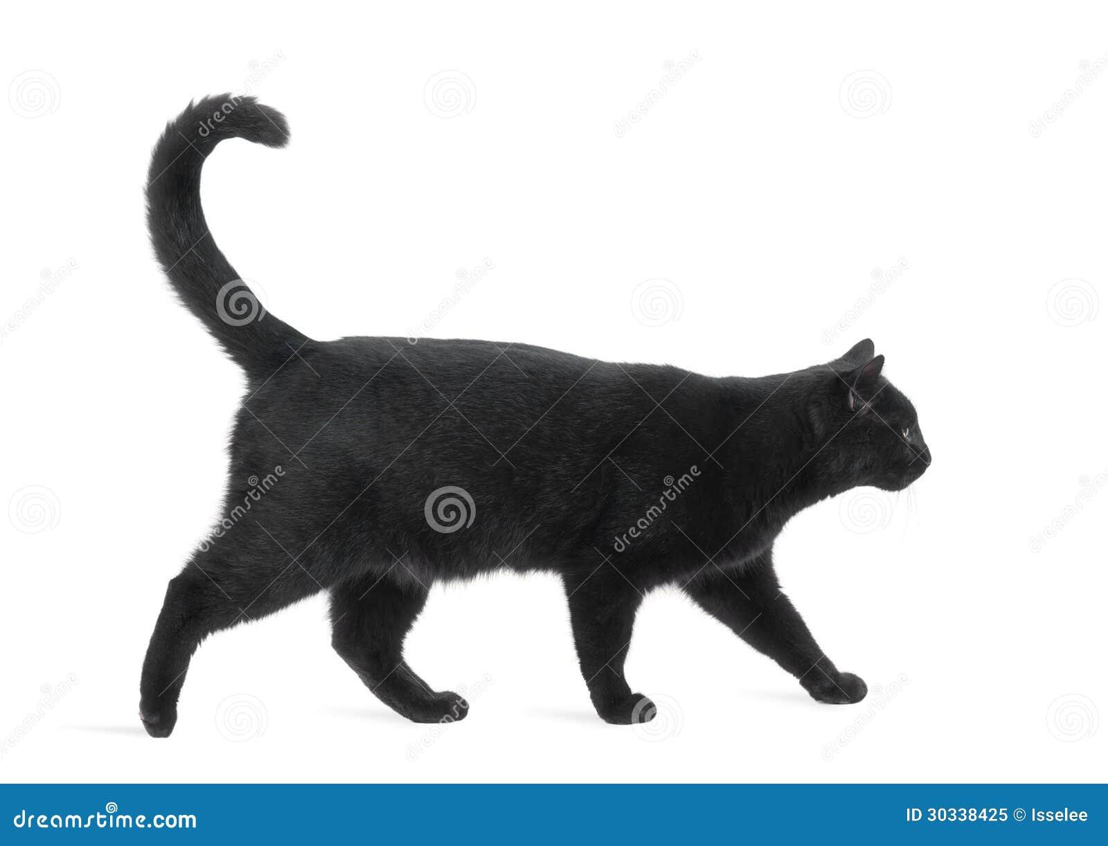 lucky cat adoptions