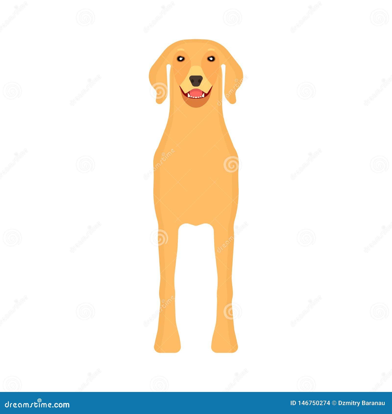 Vue de face d animal familier de Labrador de chien d icône animale de vecteur Ami heureux d isolement de bande dessin?e mignonne