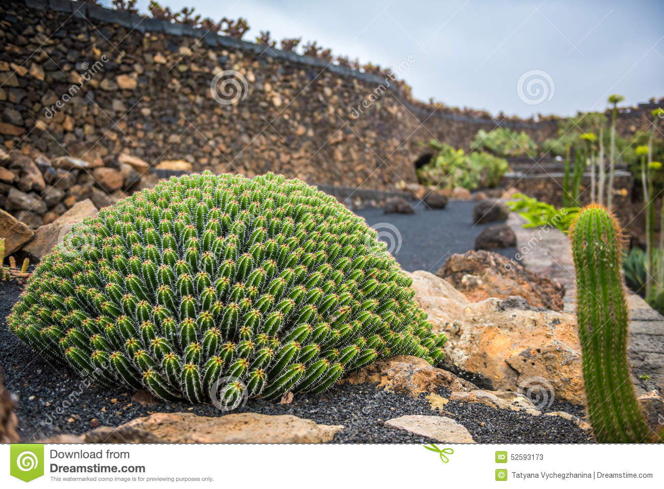 vue de jardin de cactus lanzarote photo stock image. Black Bedroom Furniture Sets. Home Design Ideas