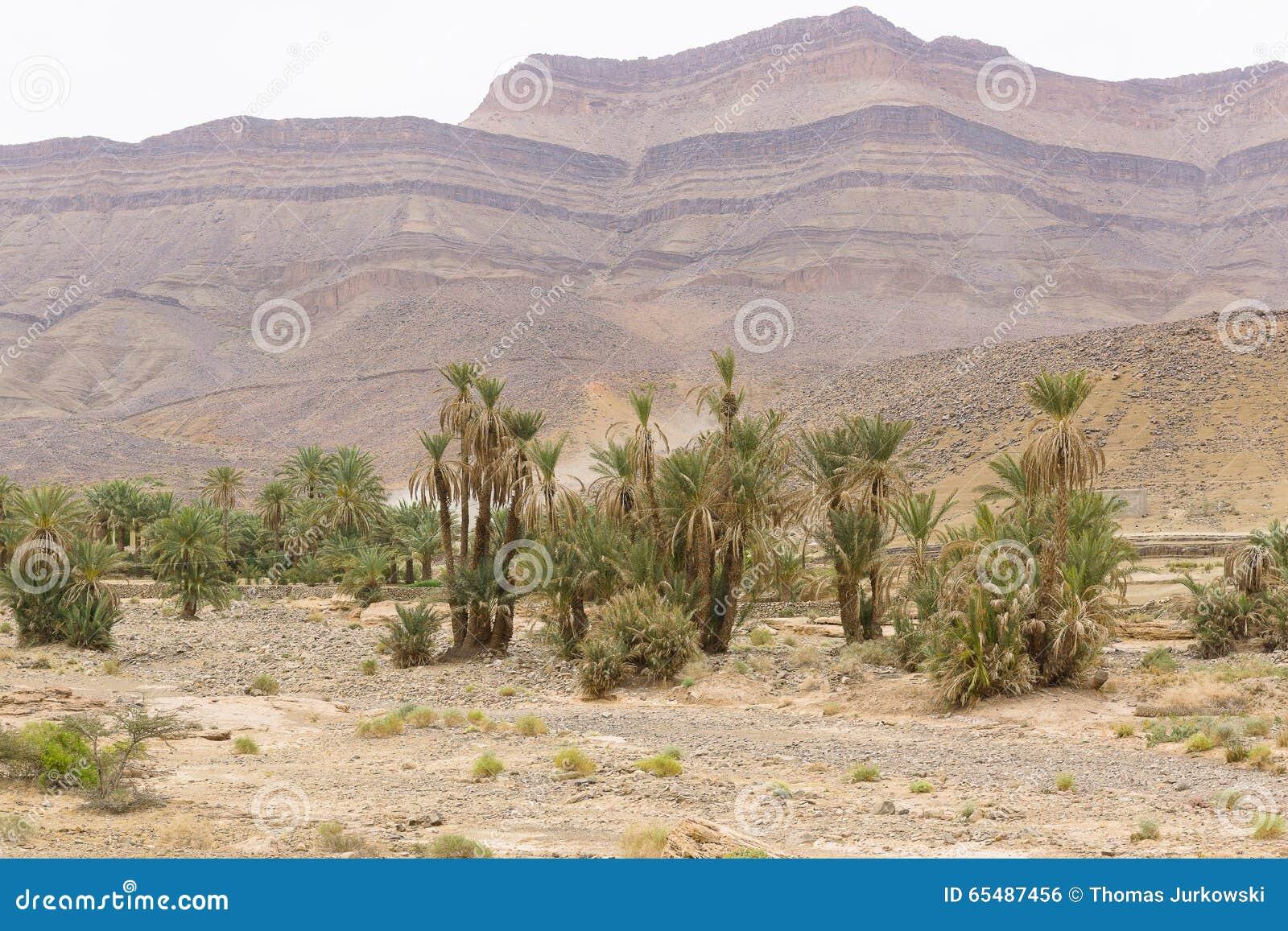 Vue de l oasis et des déserts