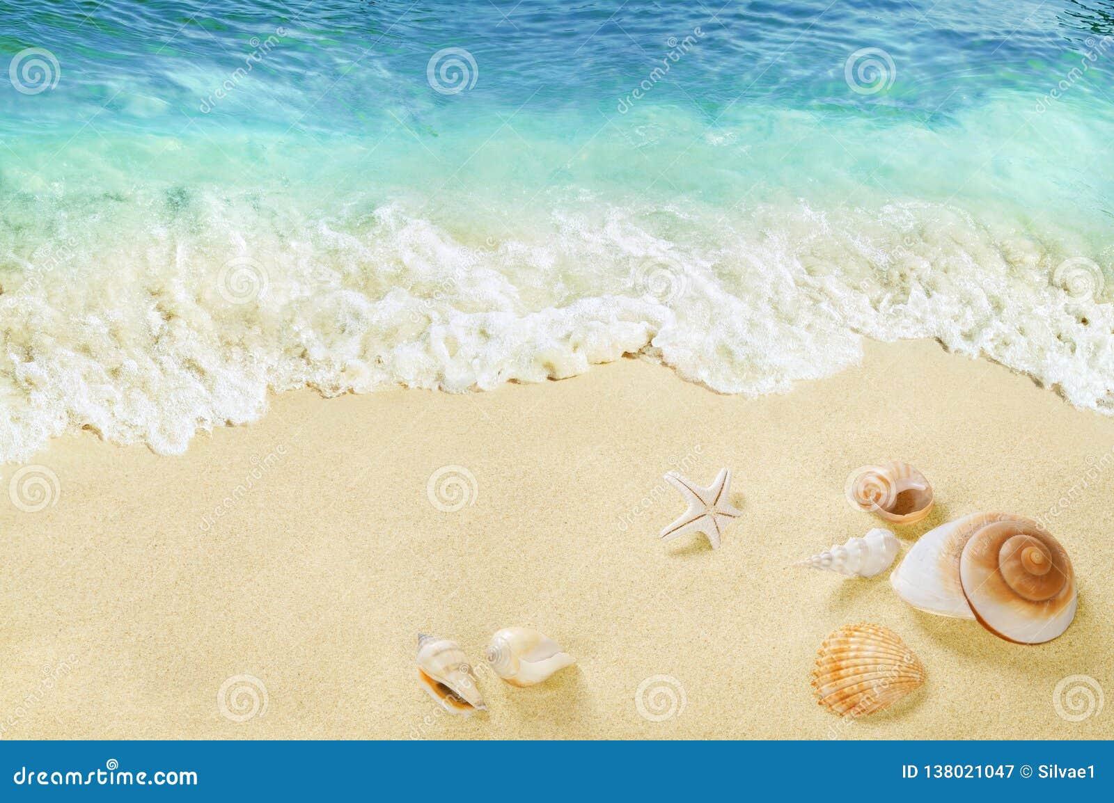 Vue de la plage avec des coquilles dans le sable