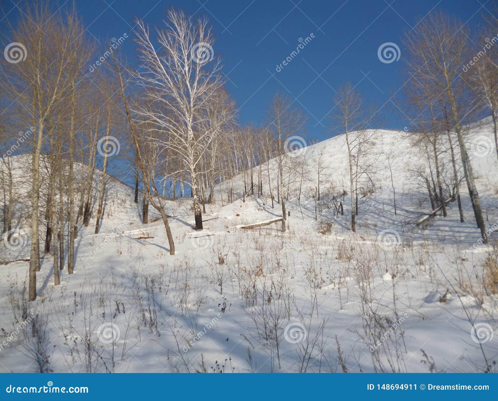 Vue de la Russie de nature de la forêt de montagne