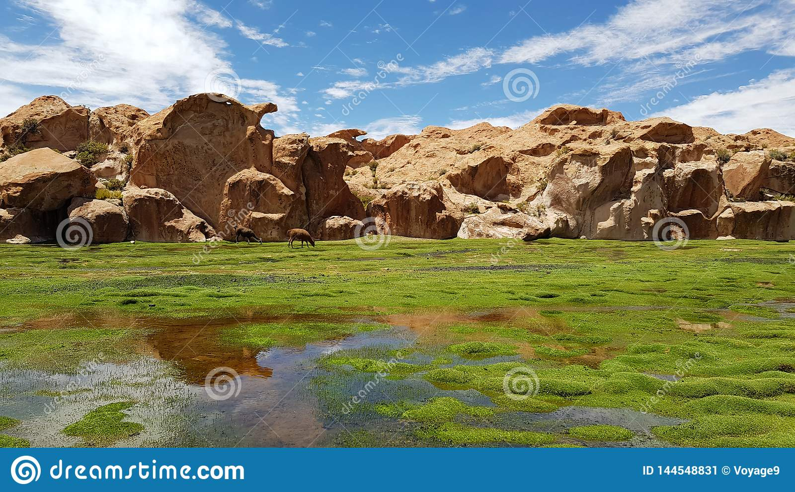 Vue de Laguna Negra et le paysage rocheux du plateau bolivien
