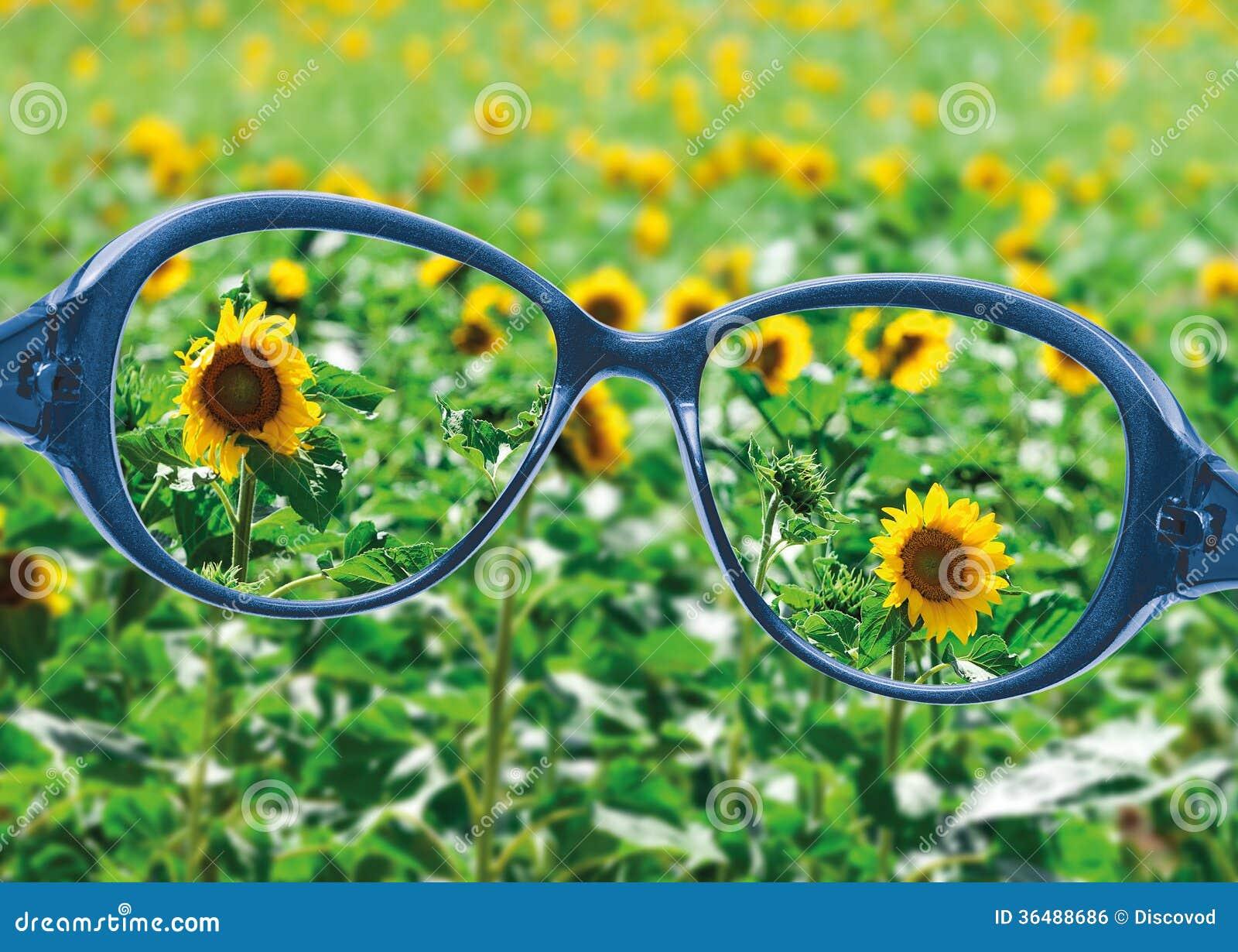 vue des lunettes de lecture sur la belle vue de nature. Black Bedroom Furniture Sets. Home Design Ideas
