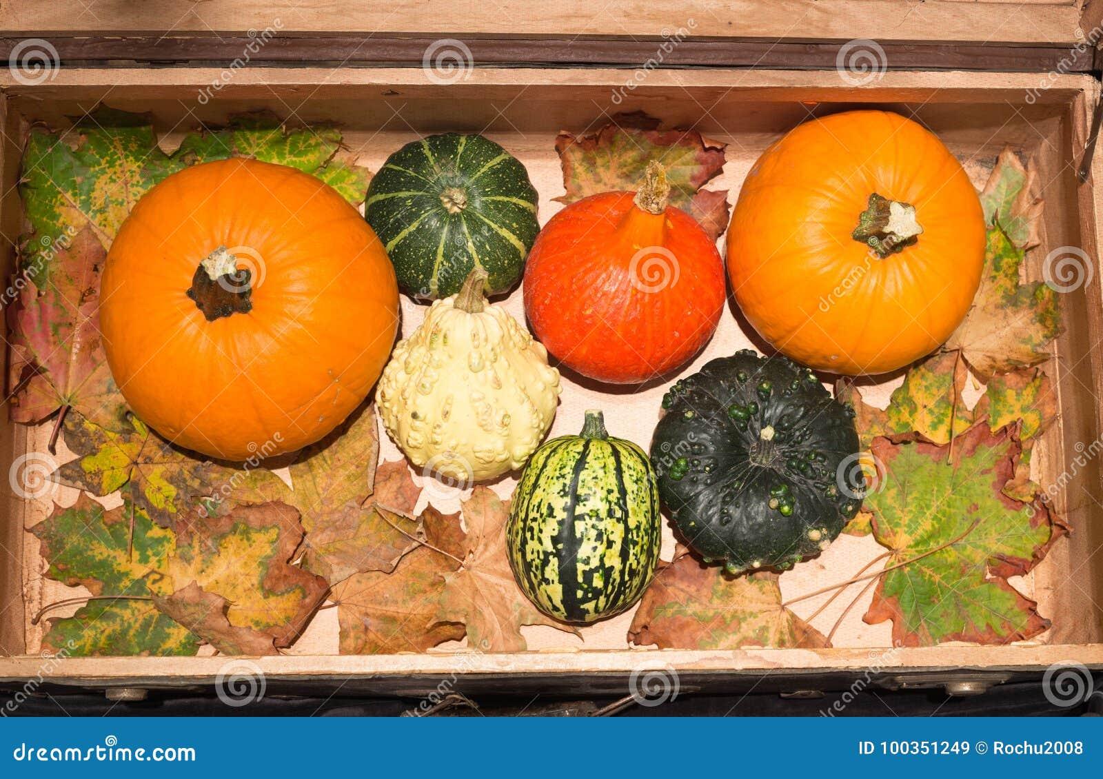 vue des potirons dans les vieilles valises concept d 39 automne et de halloween image stock image. Black Bedroom Furniture Sets. Home Design Ideas