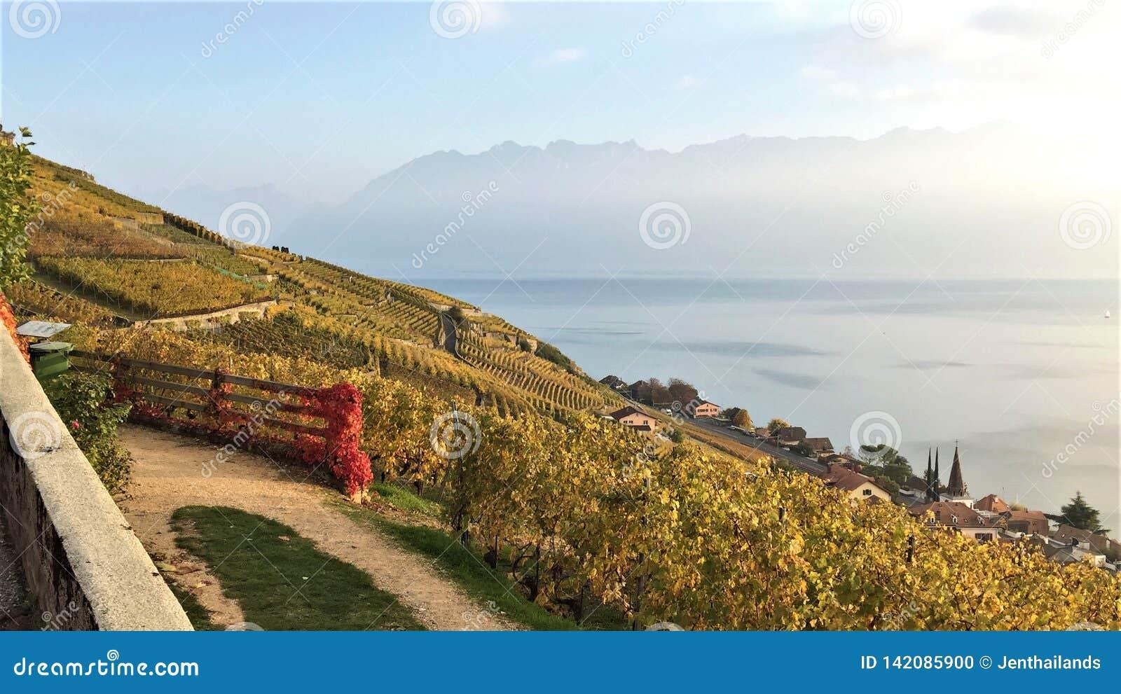 Vue des terrasses de Lavaux, du lac Léman et des montagnes à l arrière-plan, Suisse