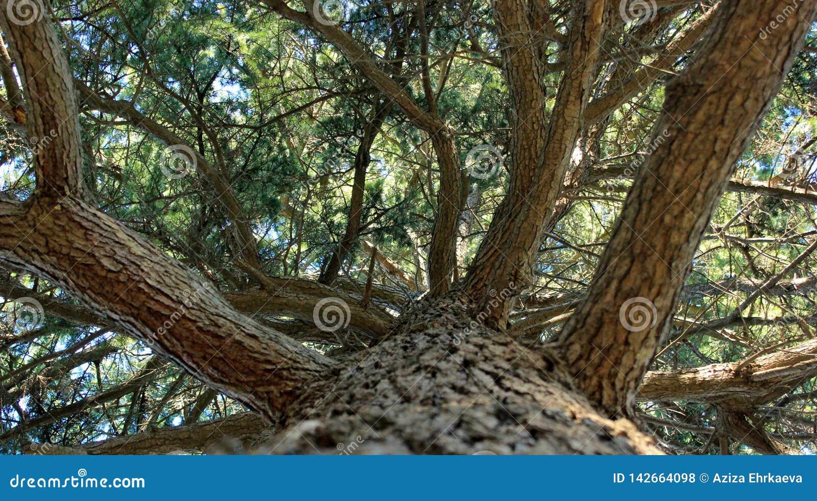 Vue inférieure d arbre énorme