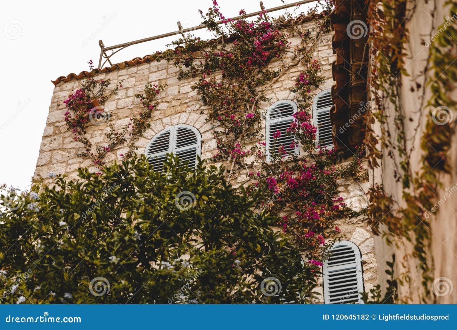 Vue inférieure du vieux bâtiment couverte de vigne,