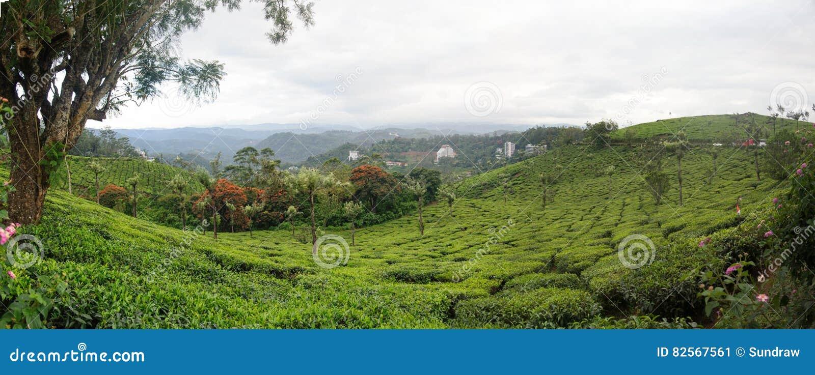 Vue panoramique dans Munnar dans Ghats occidental, Kerala