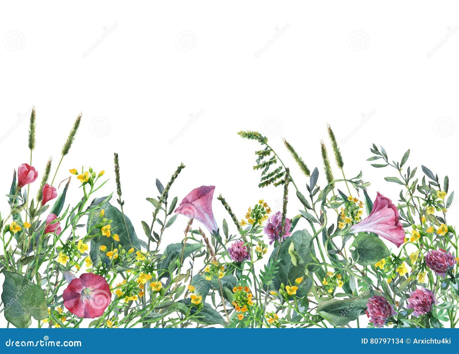 Vue panoramique des fleurs et de l herbe sauvages de pré sur le fond blanc