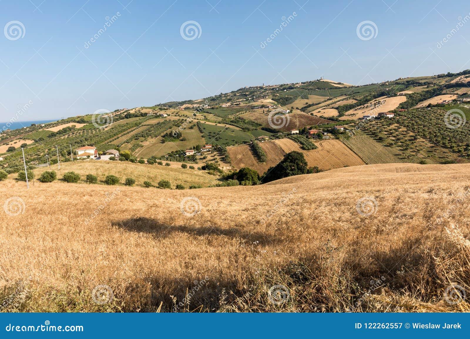 Vue panoramique des oliveraies et des fermes sur Rolling Hills de l Abruzzo
