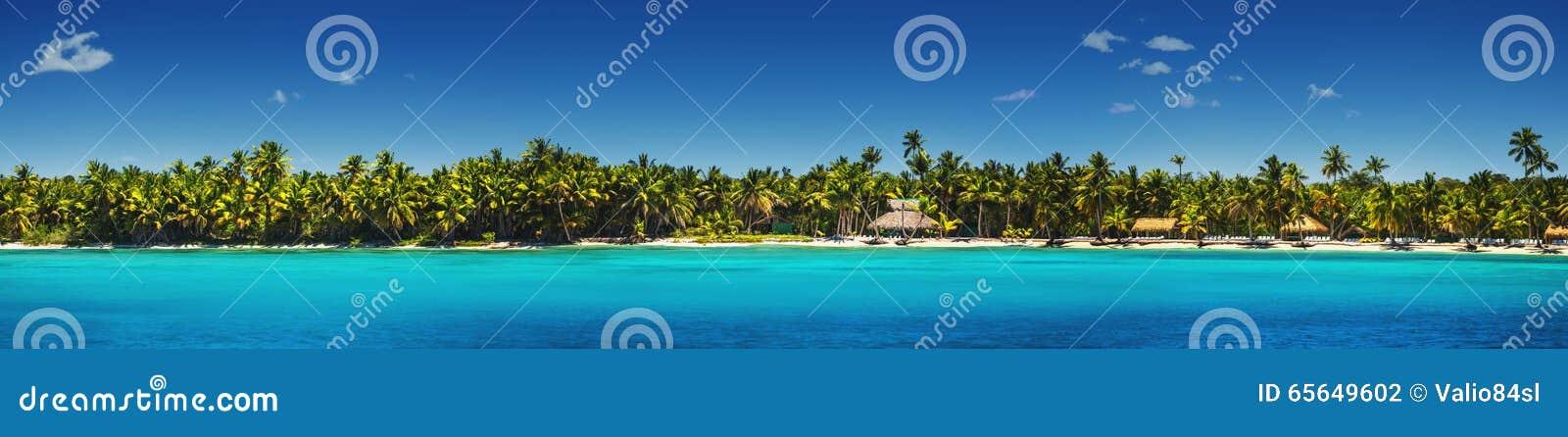 Vue panoramique des palmiers exotiques sur la plage tropicale