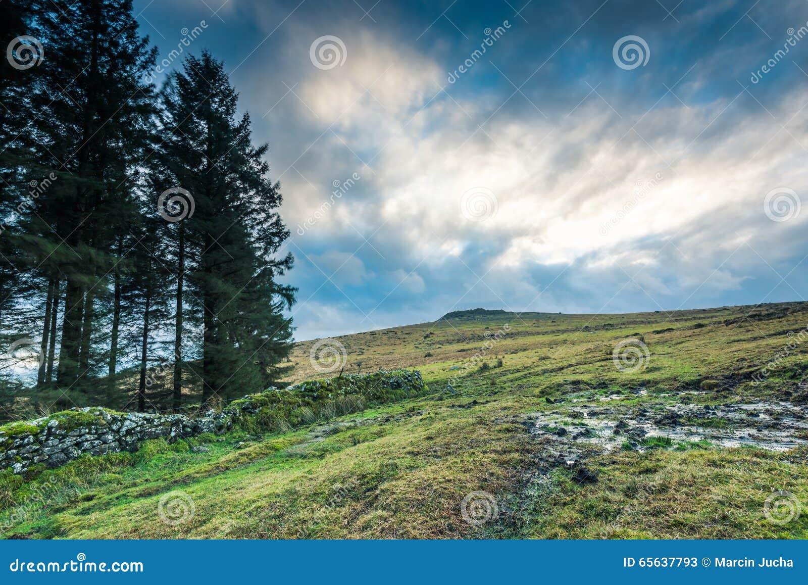 Vue panoramique sur la bruyère en Devon, R-U