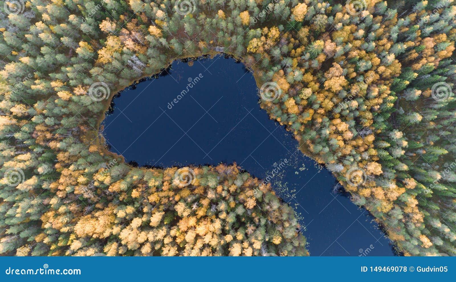 Vue a?rienne de bourdon de for?t avec les arbres jaunes et de beau paysage de lac d en haut Feuillage d automne