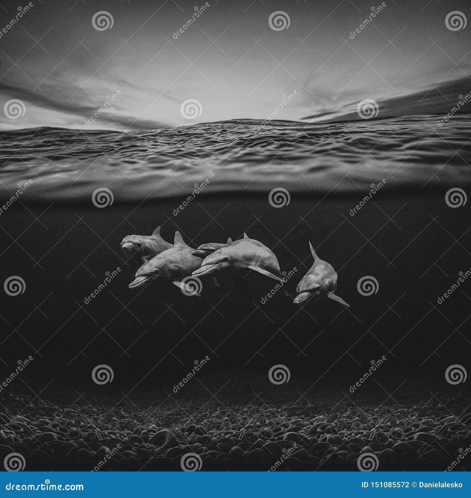 Vue sous-marine des dauphins nageant au-dessus des eaux polluées