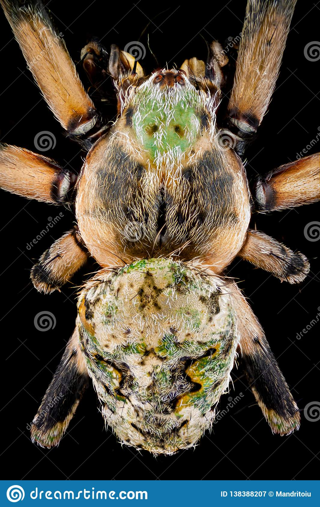 Vue supérieure d une araignée d orbweaver