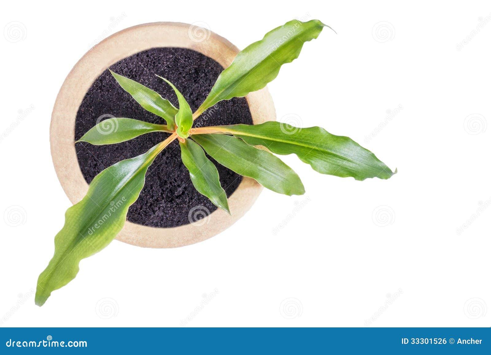 Vue sup rieure de plante d 39 int rieur grandissante dans le for Plante haute en pot