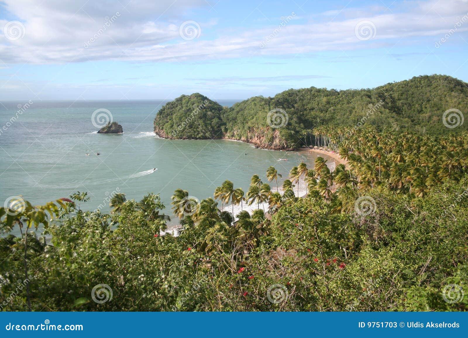 Vue tropicale de plage de ci-avant