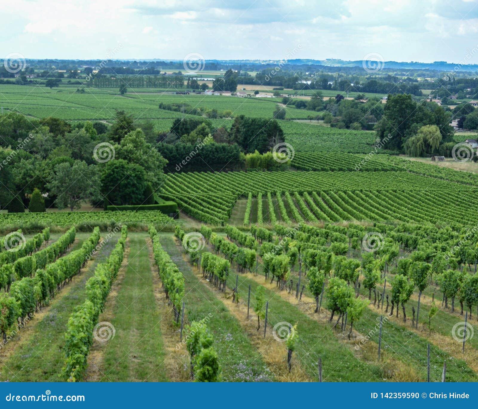 Vue verte d établissement vinicole