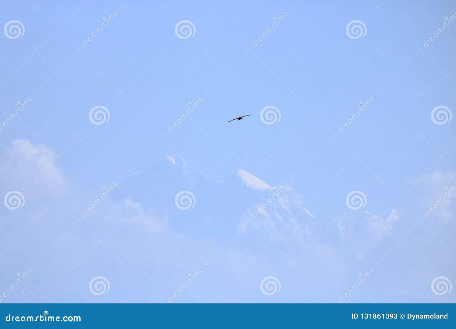 Vuelo de Eagle sobre la montaña sagrada de Himalaya