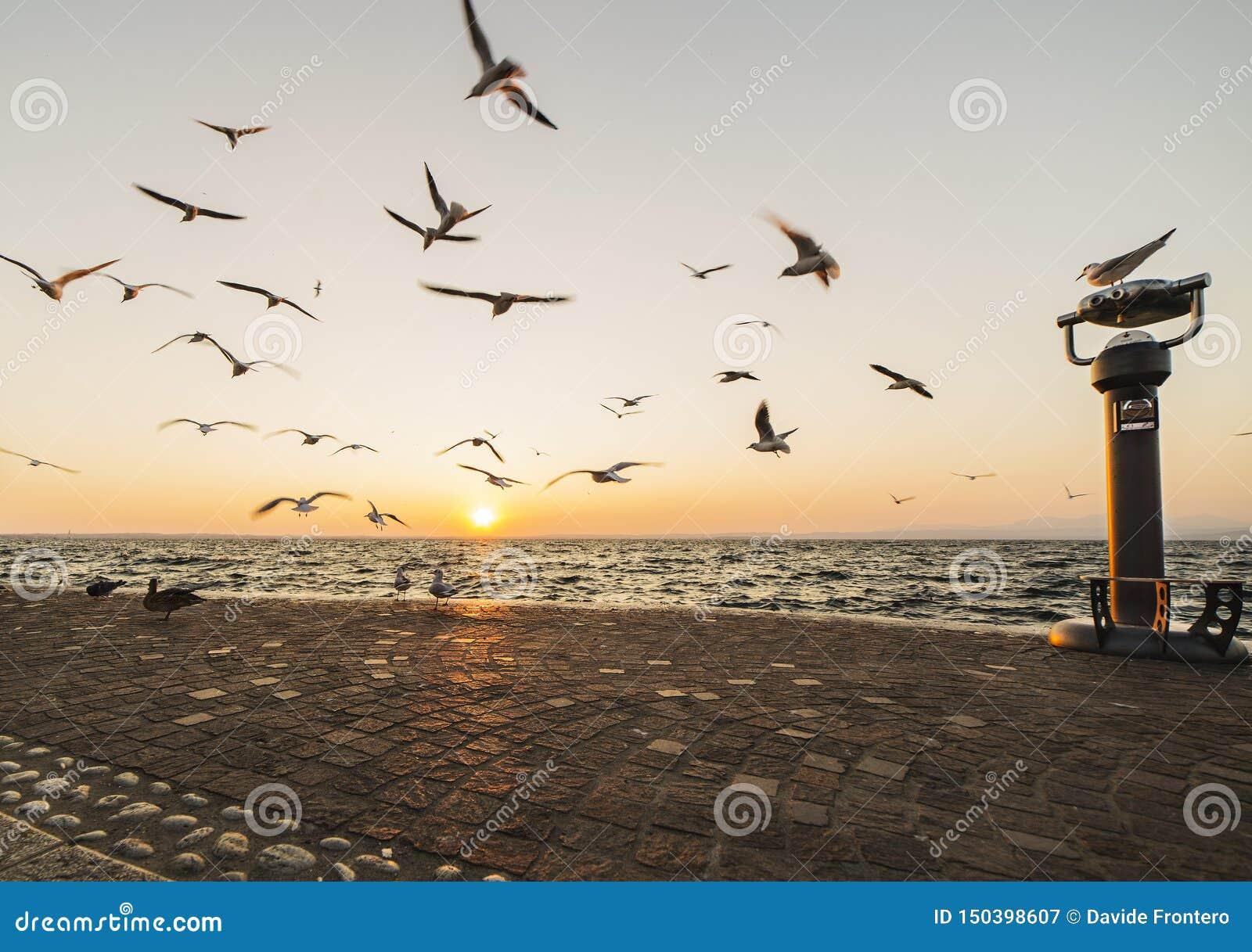 Vuelo de la gaviota en el cielo sobre garda del lago