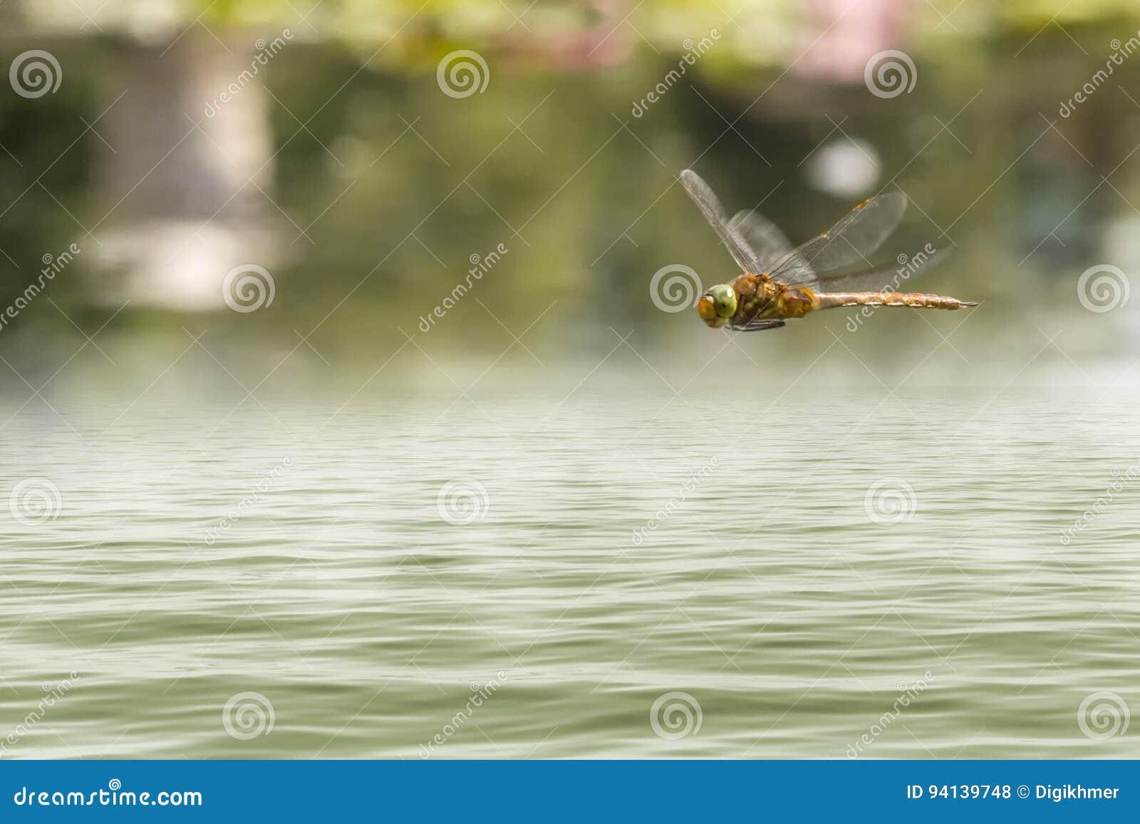 Vuelo de la libélula en un jardín del zen