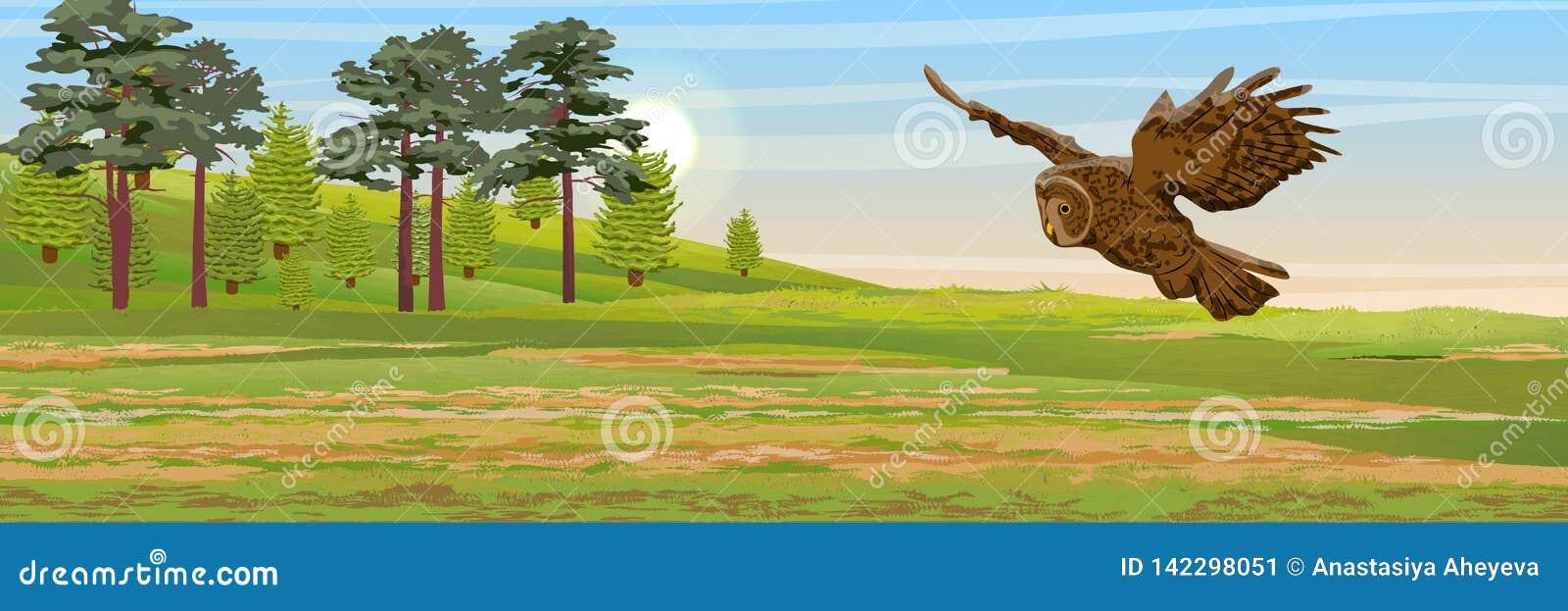 Vuelo del búho rojizo sobre el prado Pino, árboles de la picea e hierba Animales salvajes y pájaros de Eurasia y de Escandinavia