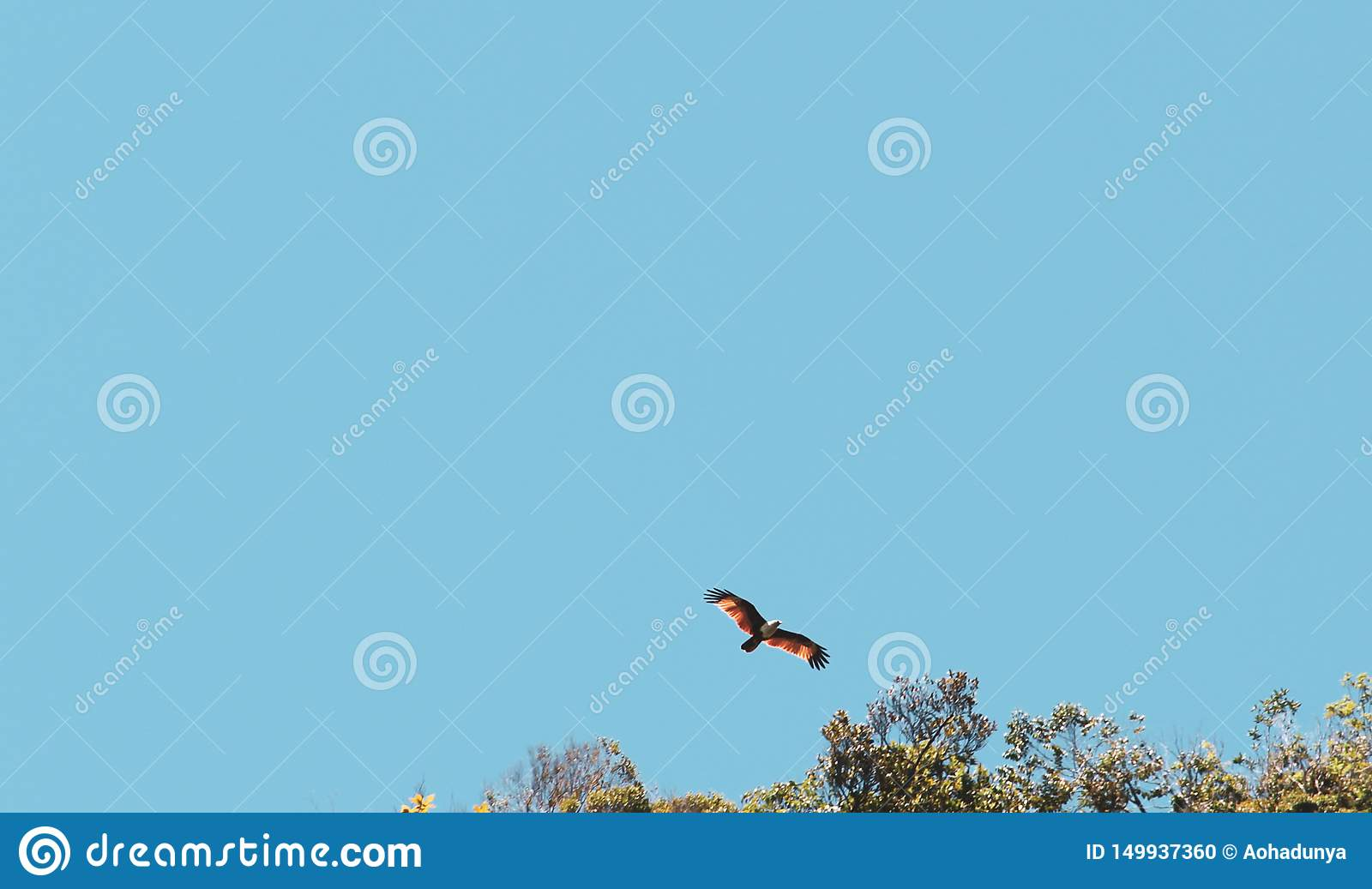 Vuelo rojo del halcón sobre el cielo