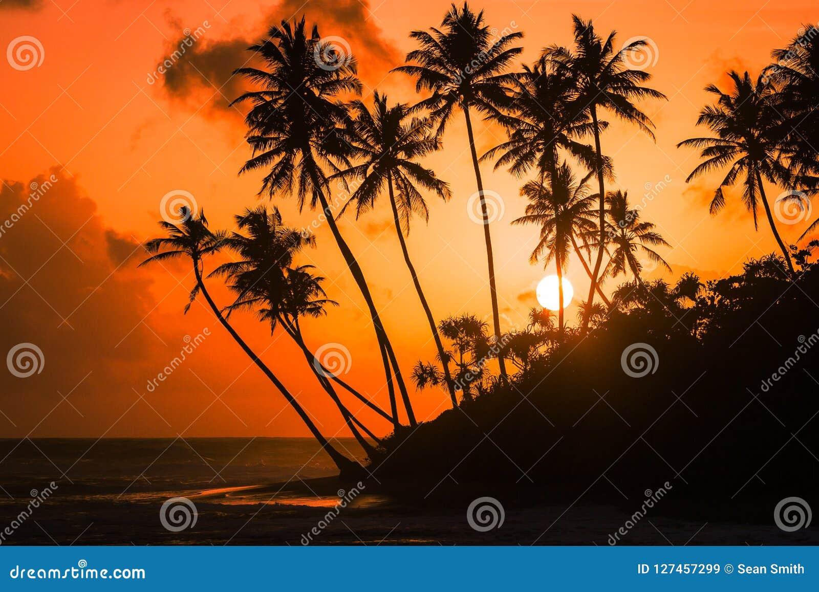 Vues de coucher du soleil à Galle le long du littoral