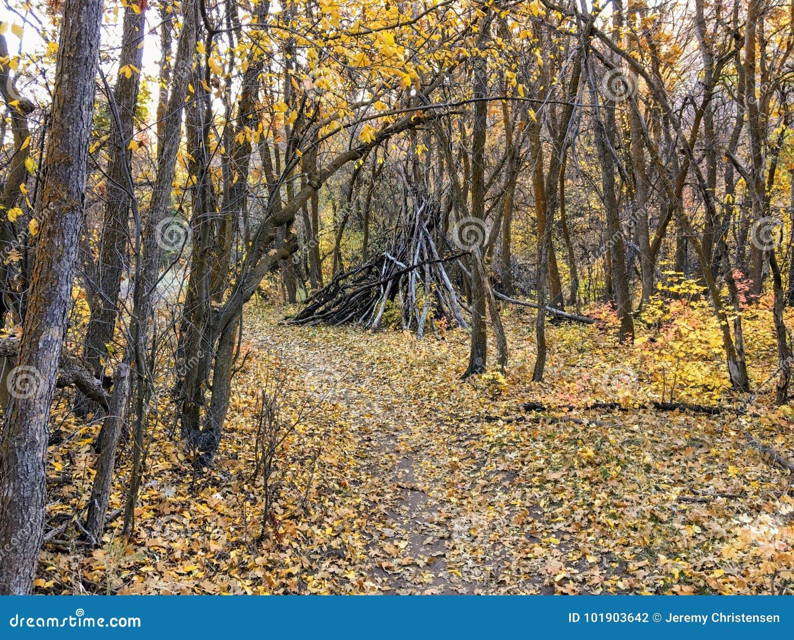 Vues de forêt d Autumn Fall augmentant par des arbres sur Rose Canyon Yellow Fork et la grande traînée de roche en montagnes d Oq