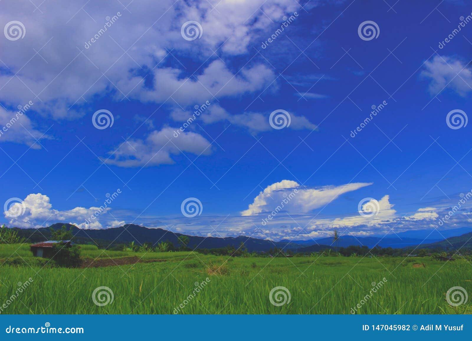 Vues douces des gisements de riz de village